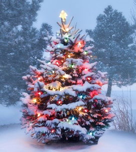 Ski Total | This Tree Glows Brightly On Snow Covered Christmas Morning